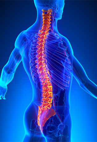 Spinal Cord Injury Treatment Research
